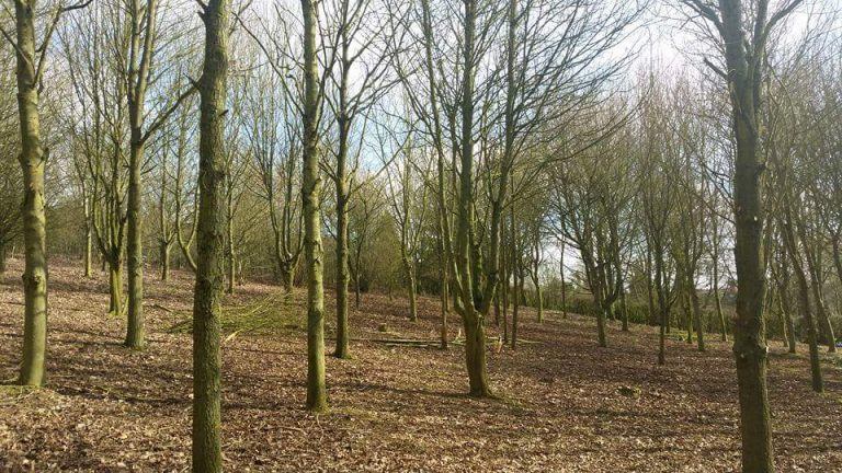 Woodland Management in Great Henny