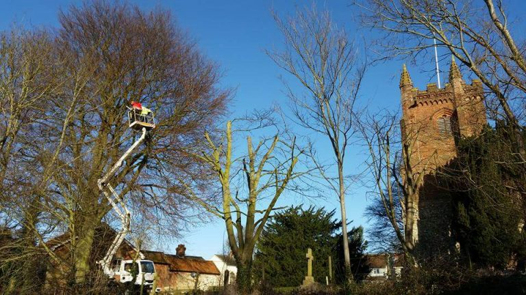 Reducing a beech tree in the Churchyard of St Andrew's, Colne Engaine